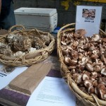Wild harvested mushrooms from Springwater Farms